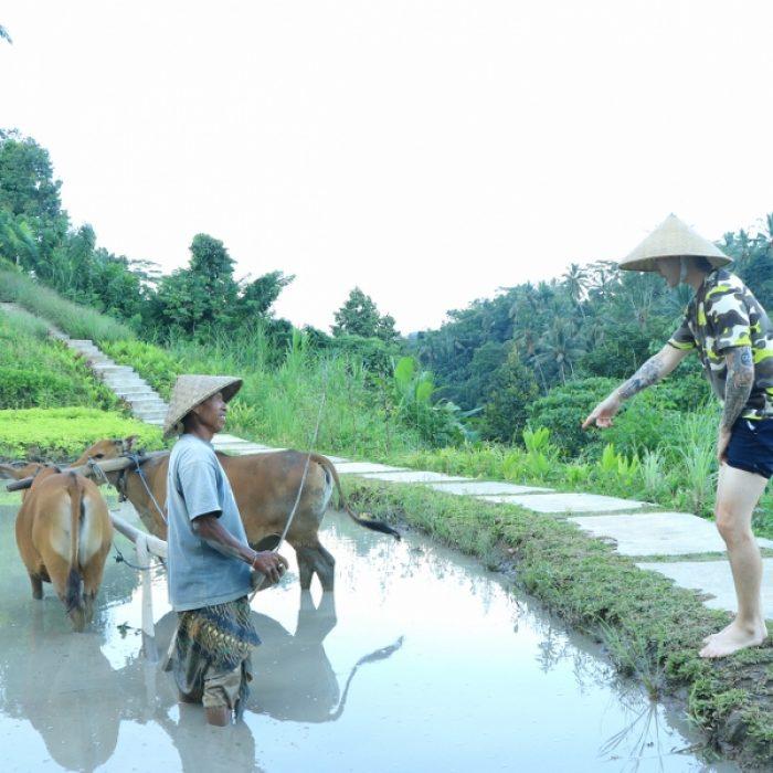 aloha-ubud-agriculture- (1)