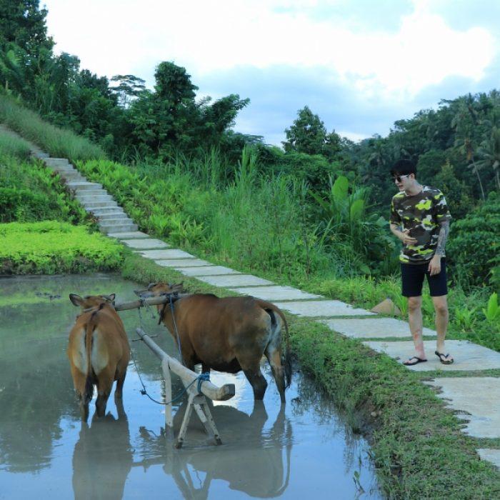 aloha-ubud-agriculture- (2)
